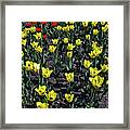 Flower Carpet. Framed Print