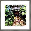 Public Fountain In Palma Majorca Spain Framed Print