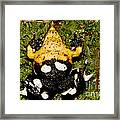 Darwins Frog Framed Print