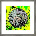 Cannabis 420 Collection Framed Print