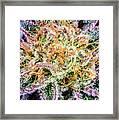 Cannabis Varieties Framed Print