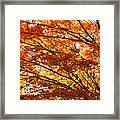 Maple Tree Foliage Framed Print