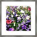 Myriad Colors Framed Print