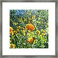 Spring Flowers In The Rain Framed Print