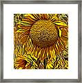 Sunflower  Framed Print