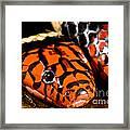 Surinam Coralsnake Framed Print
