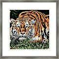 Tiger Collection Framed Print