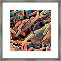 Toddlers Feces With Bifidobacteria, Sem Framed Print