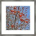 Tree In Benalmadena Framed Print