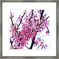 2016-03-18 Redbud Tree In Bloom Framed Print