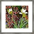 2016 Early May Side Garden Delight Framed Print