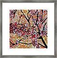 201727 Cherry Blossoms Framed Print