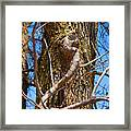 Bare Tree Branches In Early Spring Framed Print