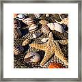Mix Group Of Seashells Framed Print