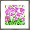 Pink Daily Lilies Framed Print