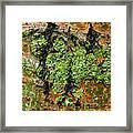 Aspen Bark After The Rain Framed Print