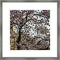 Central Park Spring Framed Print
