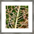 Leaf Eaten By Insects Framed Print