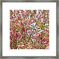 Pink Cherry Tree Framed Print