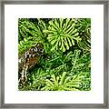 Mehu�n Green Frog Framed Print