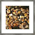 Silver Birch Leaves Lying On A Brick Path In A Cheshire Garden On An Autumn Day   England Framed Print
