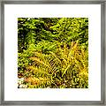 Fall Color Fern Framed Print