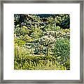 Saguaro Cactus Carnegiea Gigantea Framed Print