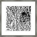 A Bayou Climbing Tree Framed Print