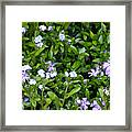 A Bed Of Blooms Framed Print