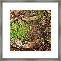 A Bowl Of Greens Framed Print