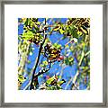 A Branch Standing Out From The Crowd Framed Print