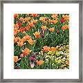 A Burst Of Spring Color Framed Print