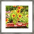 A Daisy Day Framed Print