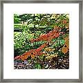 A Flame In The Forest Framed Print