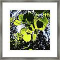 A Happy Hour Framed Print