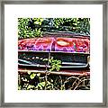 A Hidden Mustang Framed Print