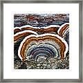 A Natural Landscape Framed Print