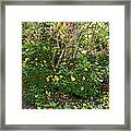 A Place Along The Way To Stop And Rest Framed Print by Eikoni Images