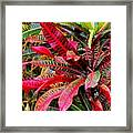 A Rich Composition Framed Print