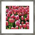 A Sea Of Coral Framed Print