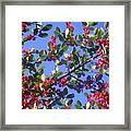 A Sky Full Of Holly Framed Print
