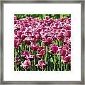 A Tulip Arrangement Framed Print