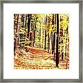 A Yellow Wood Framed Print by Joshua House