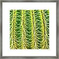 Abstract Cactus Framed Print