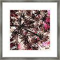 Abstract Of Low Growing Shrub  Framed Print