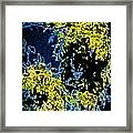 Abstract Of Tree And Leaves Framed Print