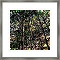 Abstract Trees 691 Framed Print