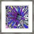 Abstract Wildflower 9 Framed Print