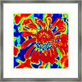 Abstract Zinnia Framed Print