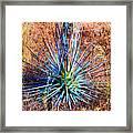 Aloe Vera In Meadow Framed Print